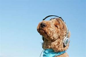A Dog Listening To Music With Headphone Photograph by ...