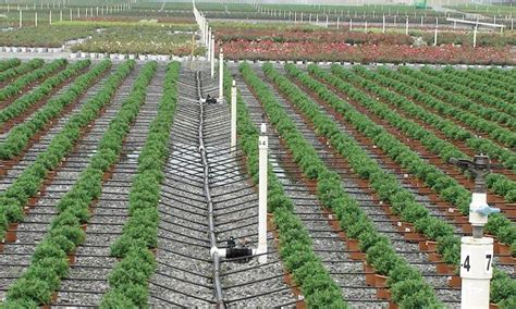 garden irrigation system drip irrigation system in a field growers supply