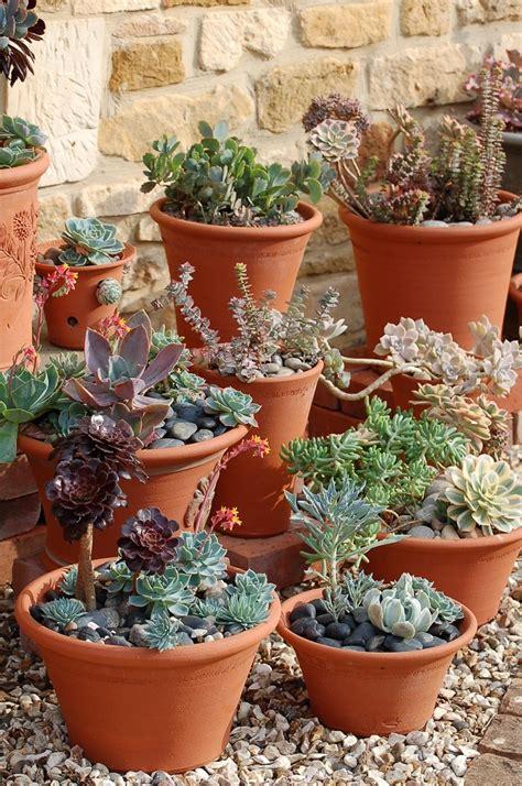 succulents in the kew gardens pot garden