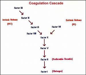 1000  Images About Coagulation On Pinterest