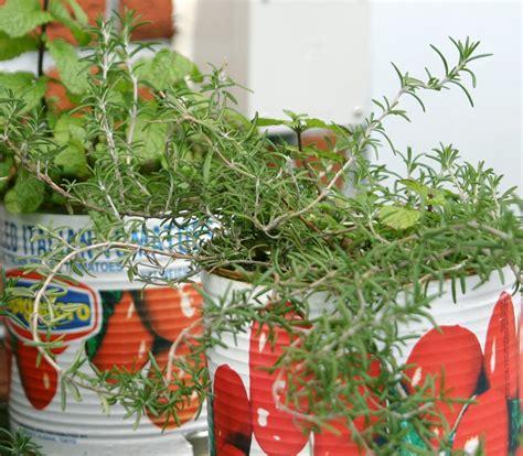 The Indoor Winter Herb Garden