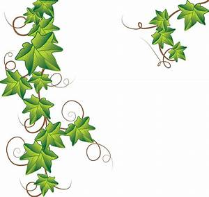 Ivy | Free Images at Clker.com - vector clip art online ...