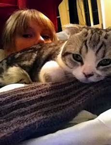 Taylor Swift and her cat Meredith - Taylor Swift Photo ...
