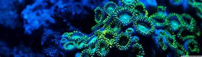 Dual Coral Screen Wallpapers Zoanthids Monitor Underwater