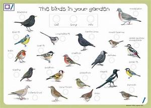 bird drawing with name - Bing images | owls | Pinterest ...