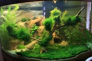 Idee Decoration Aquarium : gazon avec clado ~ Melissatoandfro.com Idées de Décoration