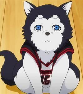 Wann Kommt Grundwasser : kuroko no basuke wann kommt der hund anime basketball anime manga ~ Whattoseeinmadrid.com Haus und Dekorationen