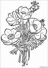 Coloring Poppies Pages Bouquet Flower Poppy Printable Drawing Coloringpagesonly Dot Five Categories sketch template