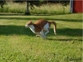 why does my cat run away from me ira story