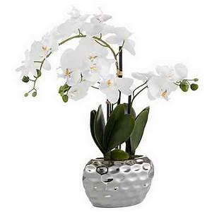 Orchideen Ohne Topf : dekoration online kaufen deko dekoartikel otto ~ Eleganceandgraceweddings.com Haus und Dekorationen