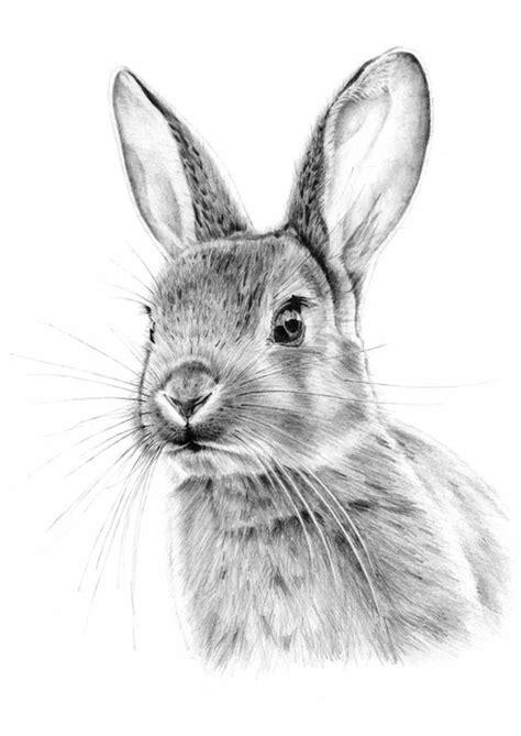 disegni a matita facili ma belli 1001 idee per disegnare con la matita molto facile