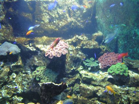 malo aquarium tarif 28 images grand aquarium st malo rue du g 233 n 233 ral patton 35400