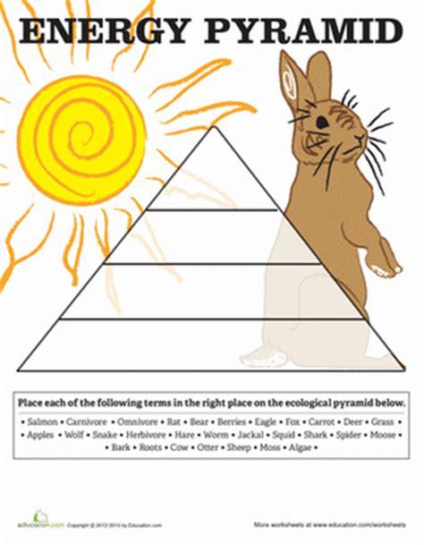 Energy Pyramid  Worksheet Educationcom