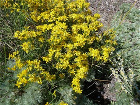 native plants montana