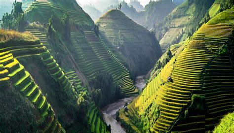 country guides vietnam guide travel paddy fields