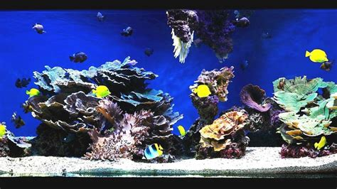 marine aquascaping techniques 17 best ideas about reef aquascaping on reef