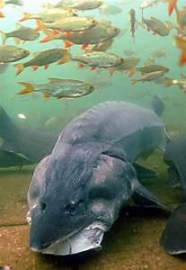 Fische Für Anfänger : referat ber fische im aquarium zuhause image idee ~ Orissabook.com Haus und Dekorationen
