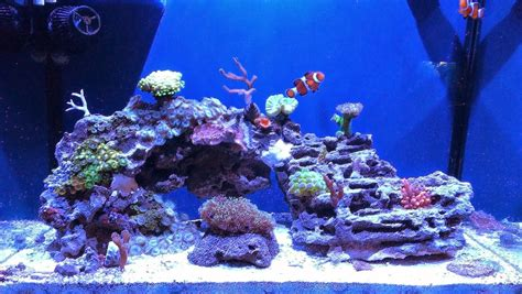 saltwater aquascape aquascape eye 11 exles for inspiration marine