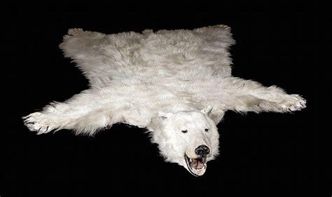 tapis peau d ours tapis peau d ours polaire naturalis 233 une attestation excep