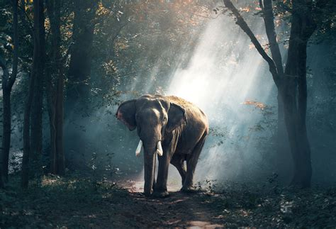 Elephant 4K Wallpaper Forest Daylight Woods Animals #1253