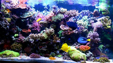 aquarium eau de mer complet tank let s see progression pics page 18 reef2reef saltwater and reef