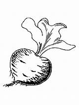 Coloring Beet Vegetables Recommended sketch template