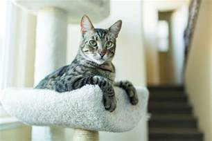 what is a tabby cat all about tabby cats and their color patterns