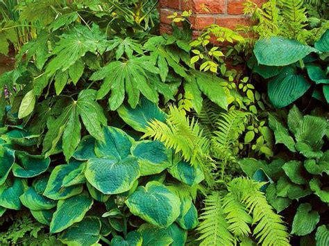 7 Gorgeous Shade Loving Plants  The Garden Glove