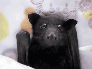 Tastefully Offensive on Tumblr, Video: Young flying-fox ...