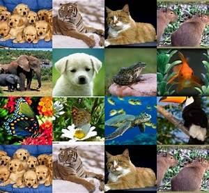 The gallery for --> Reino Animalia