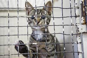 Cats in Shelters: Breaking the Vicious Circle | HuffPost