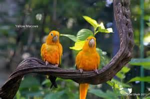 Exotic Birds From Brazil