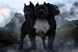 three headed dog harry potter