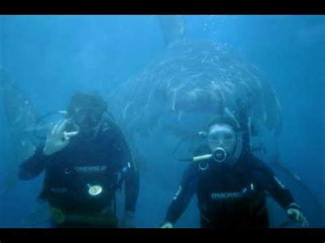 megalodon shark caught  tape  ft youtube