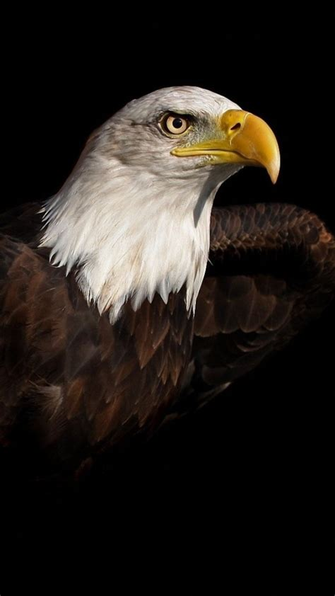 bald eagle iphone     iphone  wallpapers