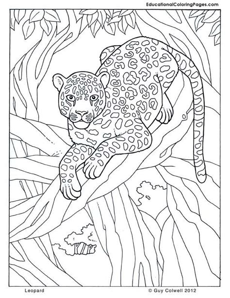 leopard jungle colouring pages page  coloring