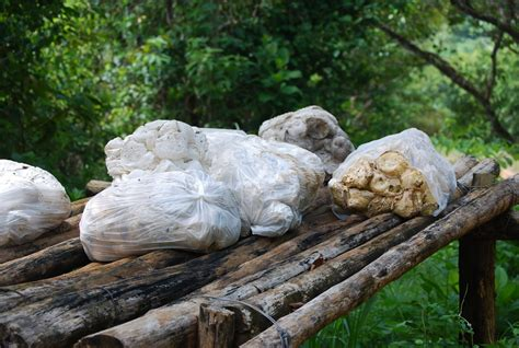 adventures   peace  october   walk   rain forest
