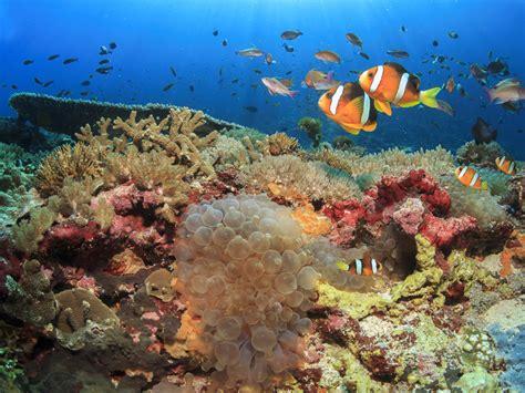 Lombok Dive Resort Diving Gili Air Gili Meno Gili Trawangan