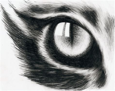 Eye Of A Cat By Hitforsa On Deviantart