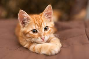 cat images cats pictures images and stock photos istock
