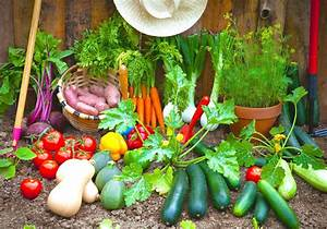 Grow your own food 10 gardening ideas for the beginner diy for Gardening vegetables