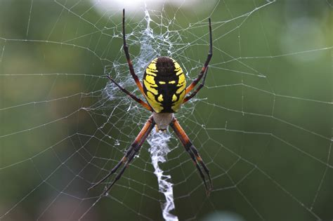 Garden Spider by Want To What S The Of A Garden Spider Like Take