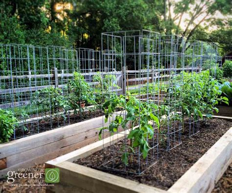 how to build a pipe l make the ultimate tomato cage growingagreenerworld com