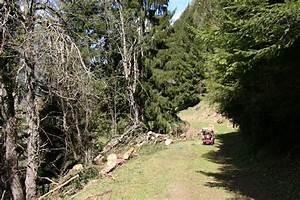 Bois De Chauffage 22 : le potager d 39 andr e 2014 avril 22 tronc d 39 arbre d biter dans une forte pente danger ~ Nature-et-papiers.com Idées de Décoration