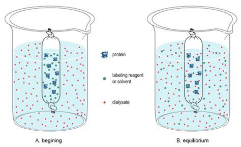 small molecule dialysis  dialysis tubing