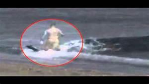 Orcas Atacan A Un Ba U00f1ista En La Orilla De La Playa