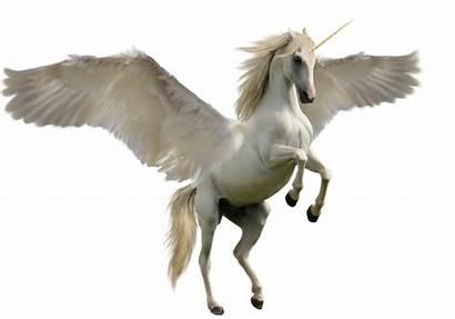 Unicorn Pegasus Clipart Transparent Clip Transprent Horse