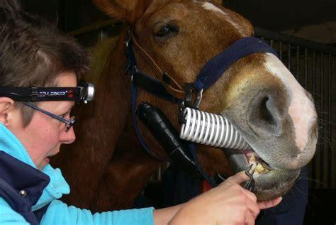 zahnbehandlung dr med vet thekla moebus prakt