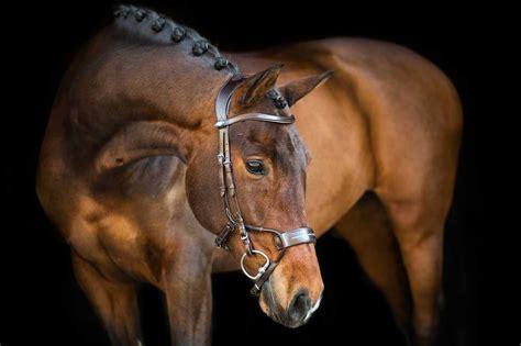 jump bridle sweden trense horse revolution micklem trensen bridles reitsport fundis gr brown