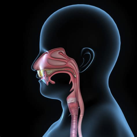 Chronic Stuffy Nose Causes Answers And Relief